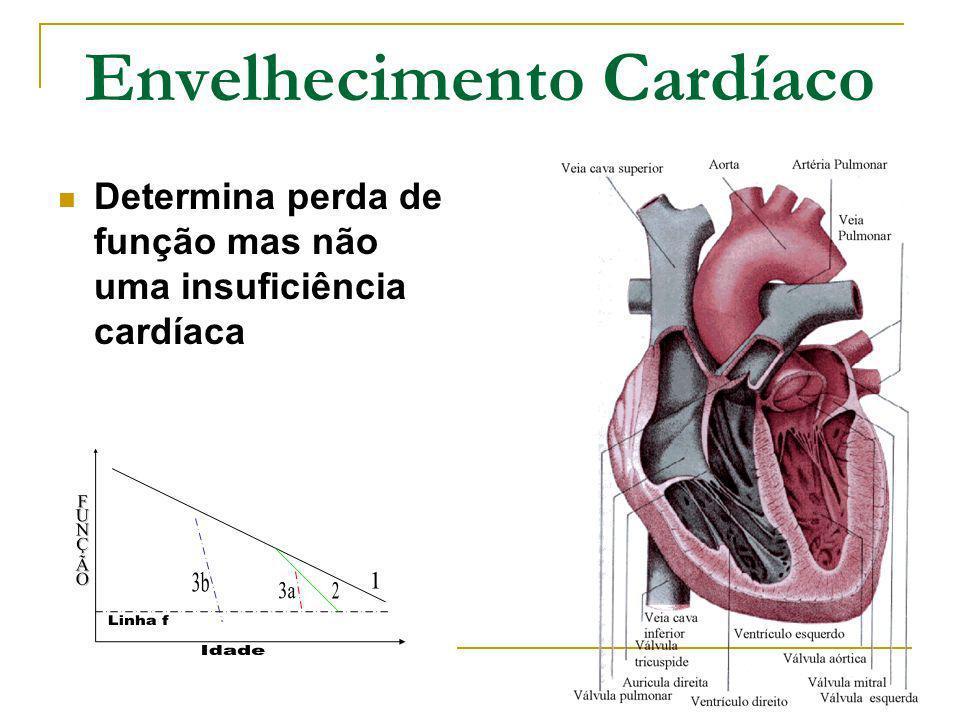 Envelhecimento Cardíaco Determina perda de função mas não uma insuficiência cardíaca