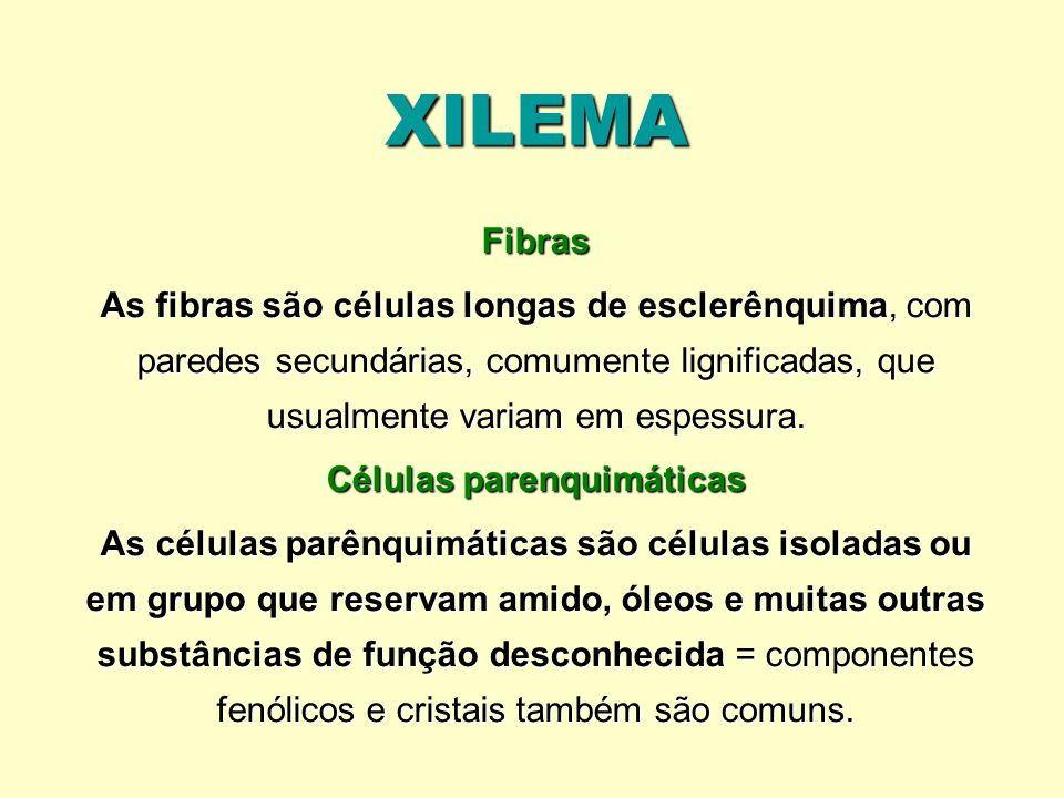 XILEMA Fibras As fibras são células longas de esclerênquima, com paredes secundárias, comumente lignificadas, que usualmente variam em espessura. Célu
