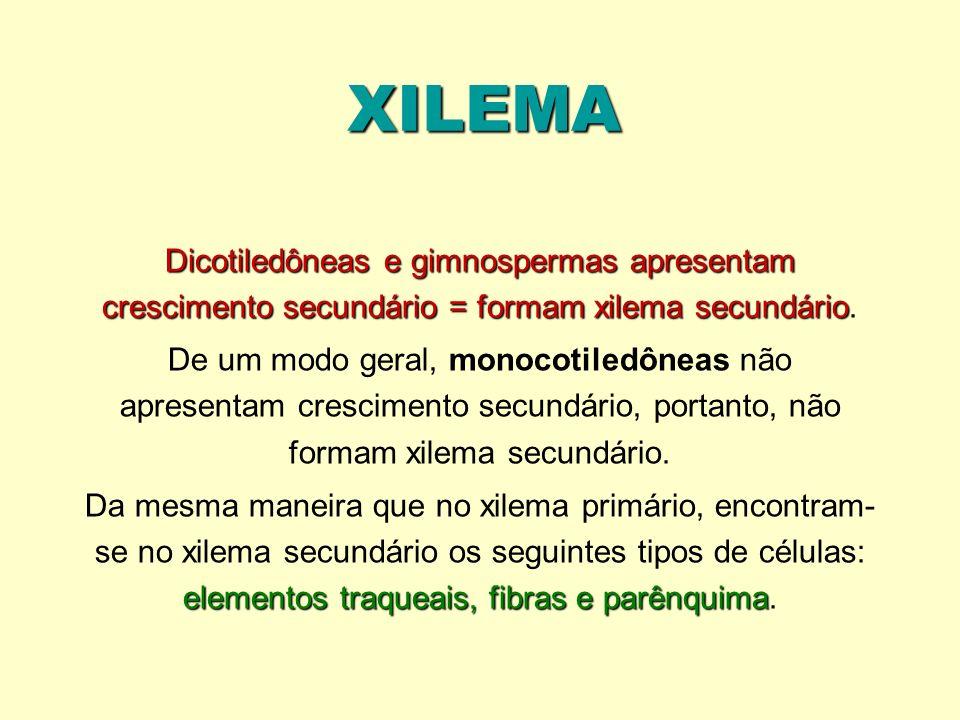 XILEMA Dicotiledôneas e gimnospermas apresentam crescimento secundário = formam xilema secundário Dicotiledôneas e gimnospermas apresentam crescimento