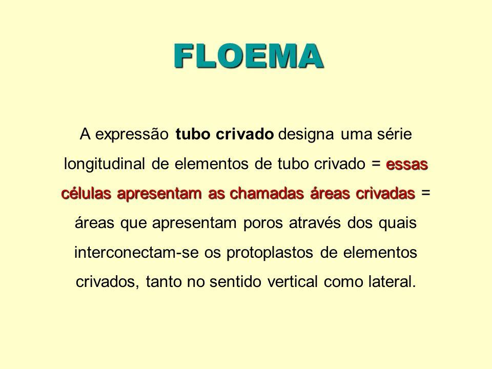 FLOEMA essas células apresentam as chamadas áreas crivadas A expressão tubo crivado designa uma série longitudinal de elementos de tubo crivado = essa