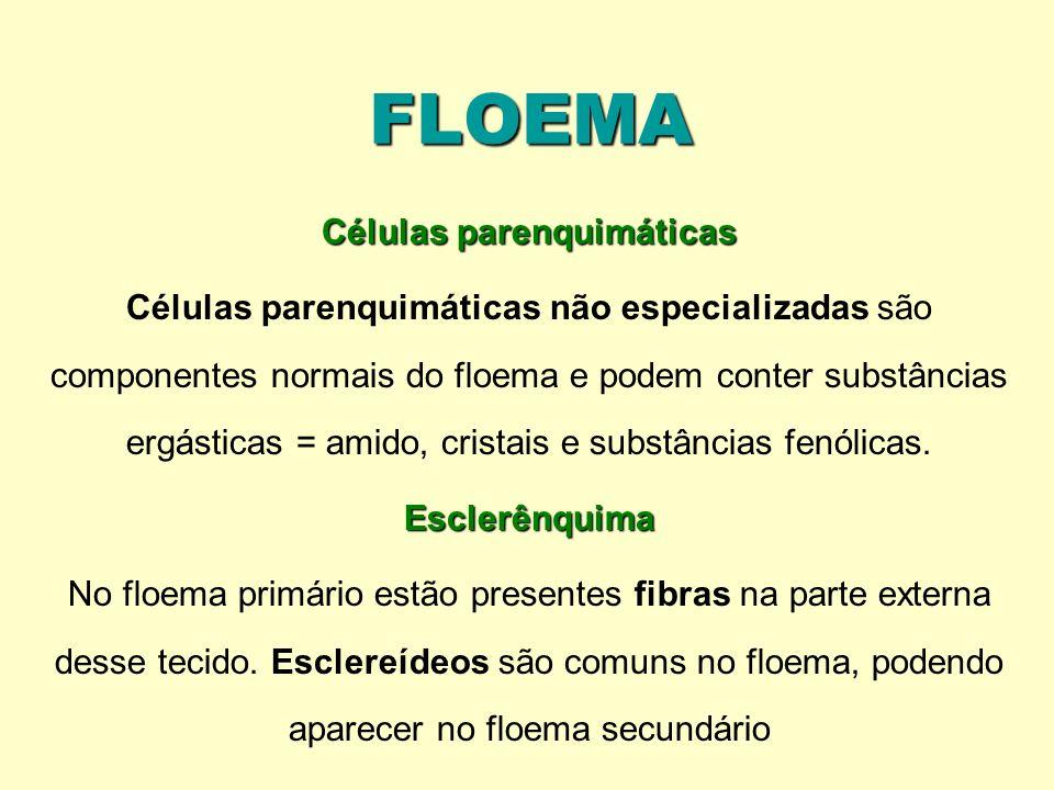 FLOEMA Células parenquimáticas Células parenquimáticas não especializadas são componentes normais do floema e podem conter substâncias ergásticas = am