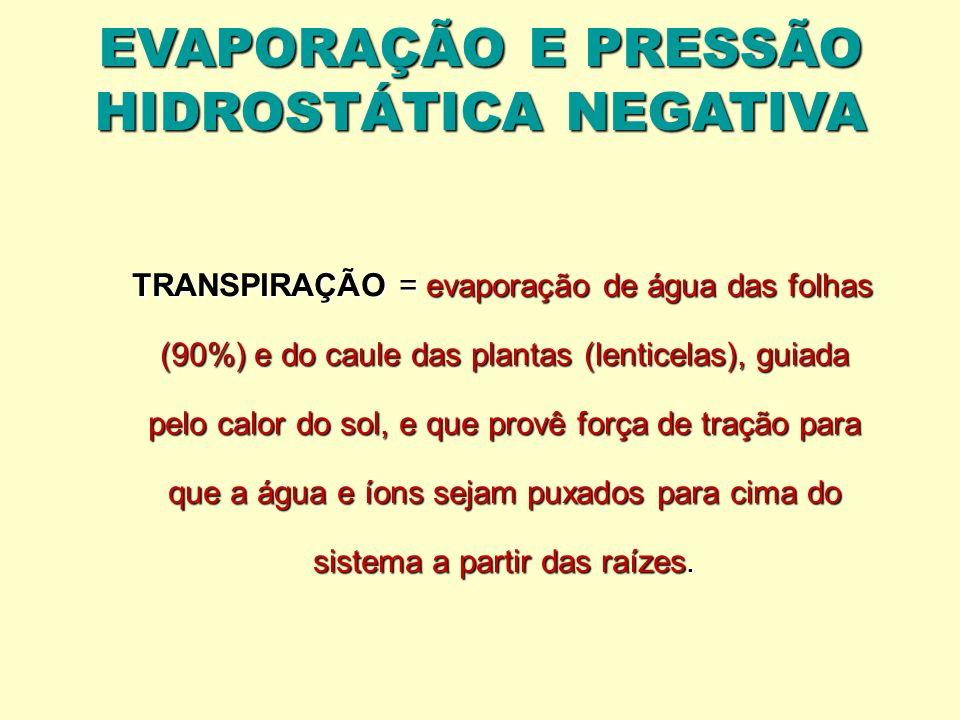 EVAPORAÇÃO E PRESSÃO HIDROSTÁTICA NEGATIVA TRANSPIRAÇÃO = evaporação de água das folhas (90%) e do caule das plantas (lenticelas), guiada pelo calor d