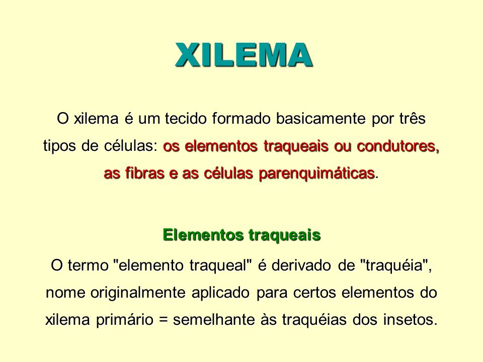 XILEMA O xilema é um tecido formado basicamente por três tipos de células: os elementos traqueais ou condutores, as fibras e as células parenquimática