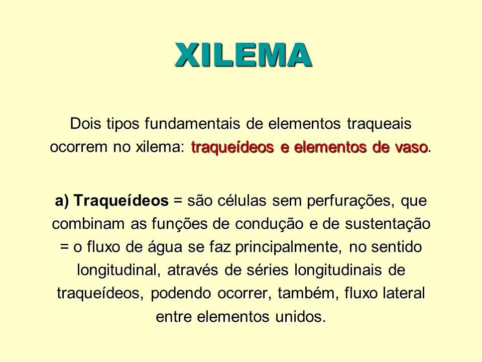 XILEMA Dois tipos fundamentais de elementos traqueais ocorrem no xilema: traqueídeos e elementos de vaso. a) Traqueídeos = são células sem perfurações