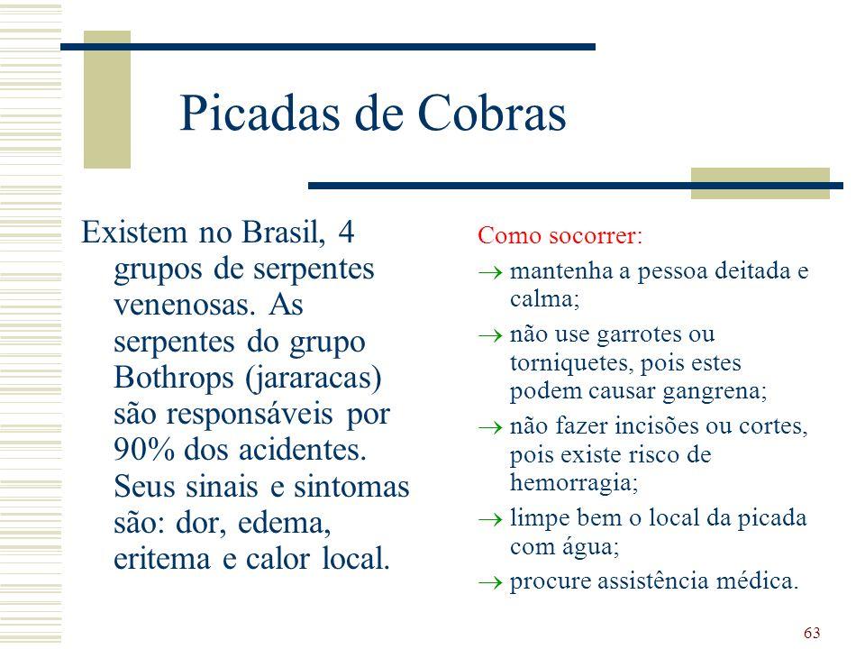 63 Picadas de Cobras Existem no Brasil, 4 grupos de serpentes venenosas.