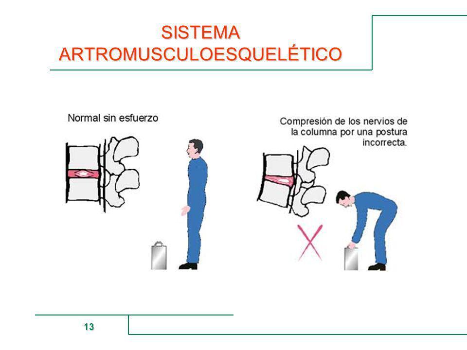 MUTUAL DE SEGURIDAD 13 SISTEMA ARTROMUSCULOESQUELÉTICO