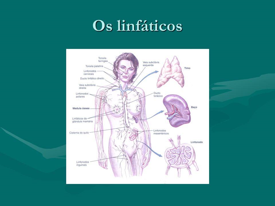Os linfáticos