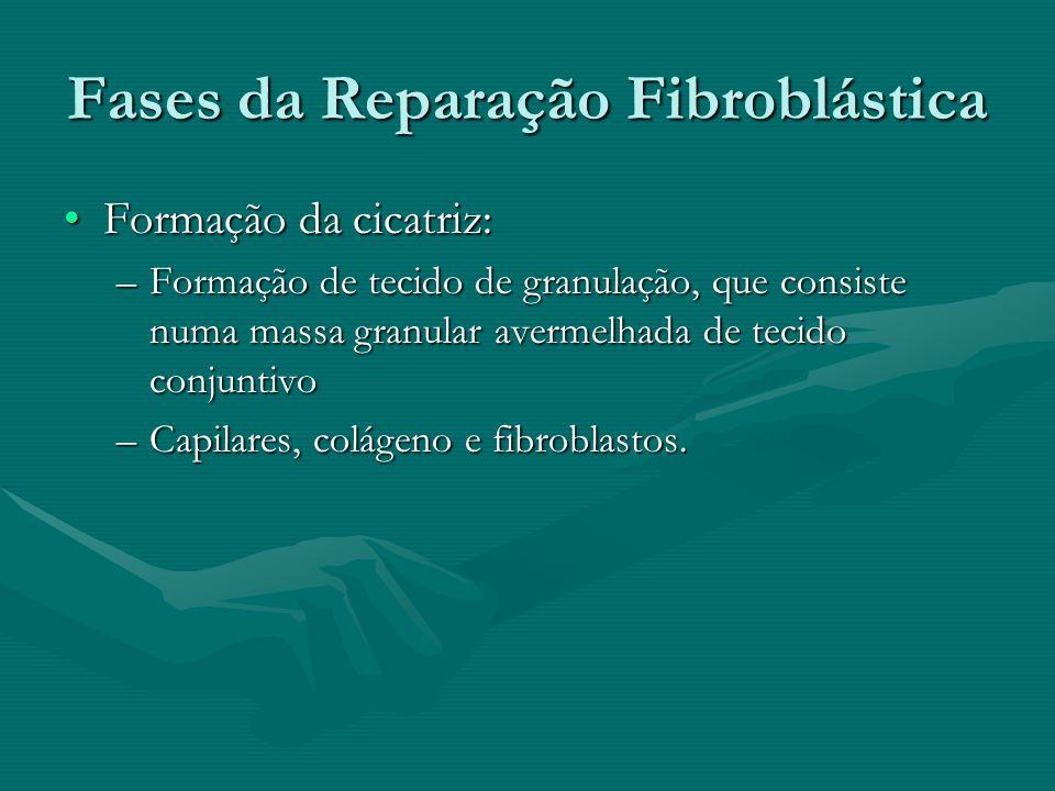 Fases da Reparação Fibroblástica Formação da cicatriz:Formação da cicatriz: –Formação de tecido de granulação, que consiste numa massa granular averme