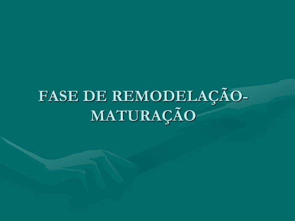 FASE DE REMODELAÇÃO- MATURAÇÃO