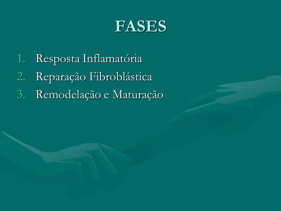 FASES 1.Resposta Inflamatória 2.Reparação Fibroblástica 3.Remodelação e Maturação
