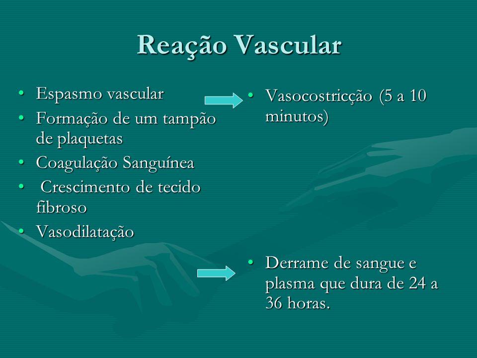 Reação Vascular Espasmo vascularEspasmo vascular Formação de um tampão de plaquetasFormação de um tampão de plaquetas Coagulação SanguíneaCoagulação S