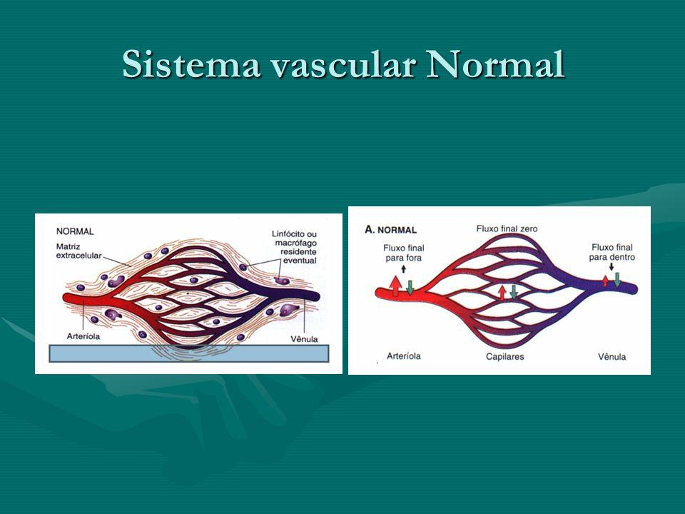 Sistema vascular Normal