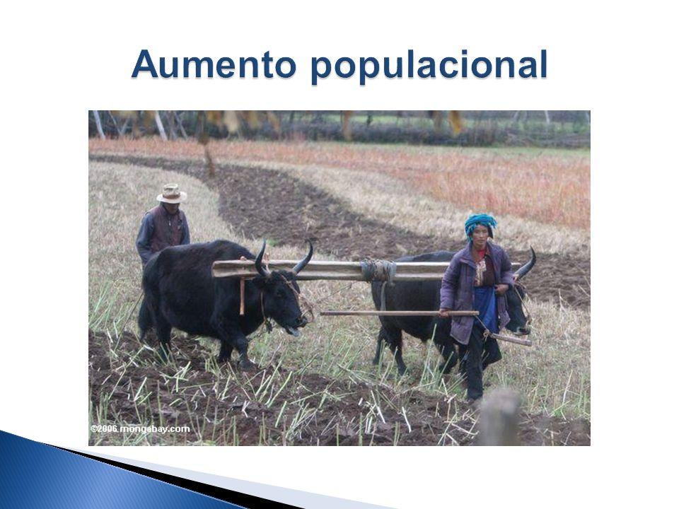 Aumento populacional; Necessidade de maior produção agrícola; Formação de núcleos populacionais no entorno dos castelos, igrejas e mosteiros; Desenvol