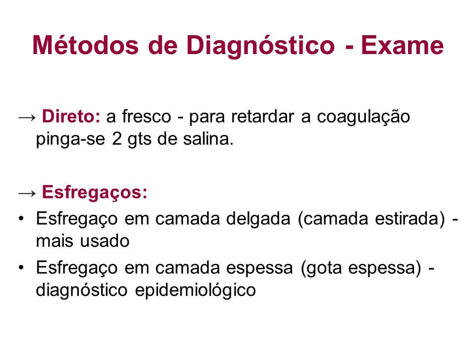 Métodos de Diagnóstico - Exame Direto: a fresco - para retardar a coagulação pinga-se 2 gts de salina. Esfregaços: Esfregaço em camada delgada (camada