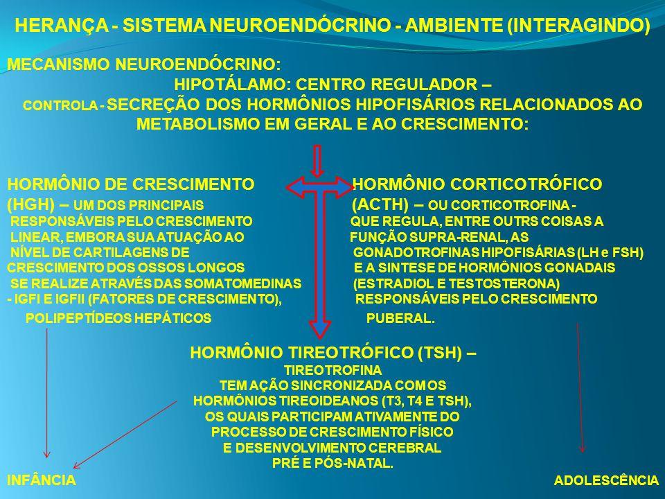 HERANÇA - SISTEMA NEUROENDÓCRINO - AMBIENTE (INTERAGINDO) MECANISMO NEUROENDÓCRINO: HIPOTÁLAMO: CENTRO REGULADOR – CONTROLA - SECREÇÃO DOS HORMÔNIOS H