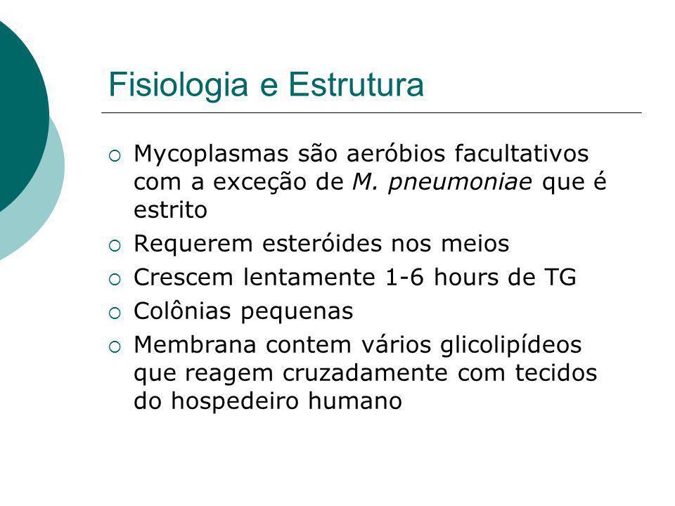 Fisiologia e Estrutura Mycoplasmas são aeróbios facultativos com a exceção de M.