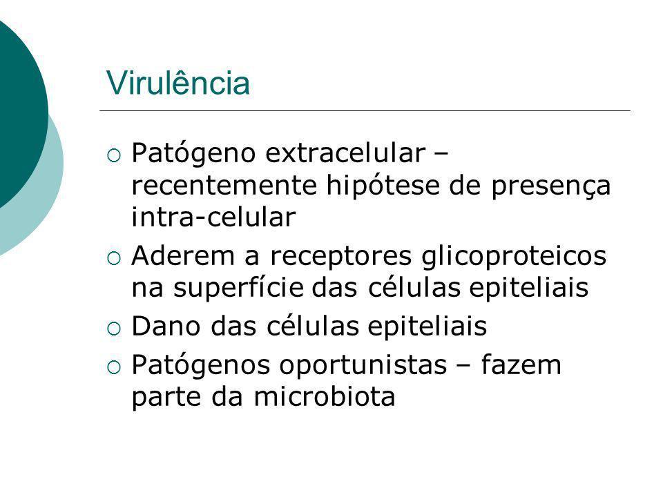 Virulência Patógeno extracelular – recentemente hipótese de presença intra-celular Aderem a receptores glicoproteicos na superfície das células epiteliais Dano das células epiteliais Patógenos oportunistas – fazem parte da microbiota