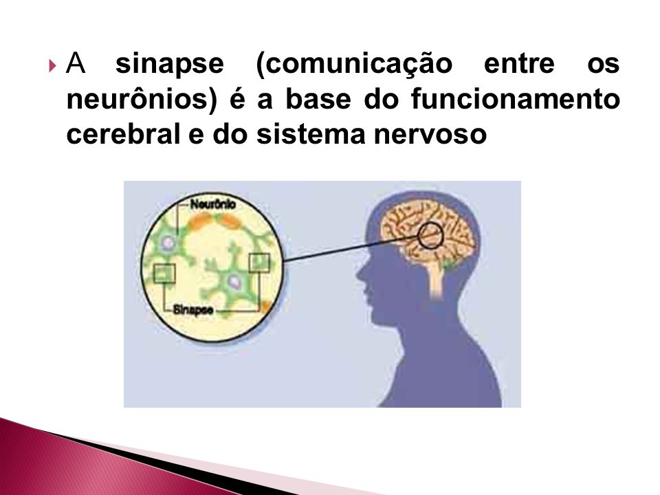 A sinapse (comunicação entre os neurônios) é a base do funcionamento cerebral e do sistema nervoso