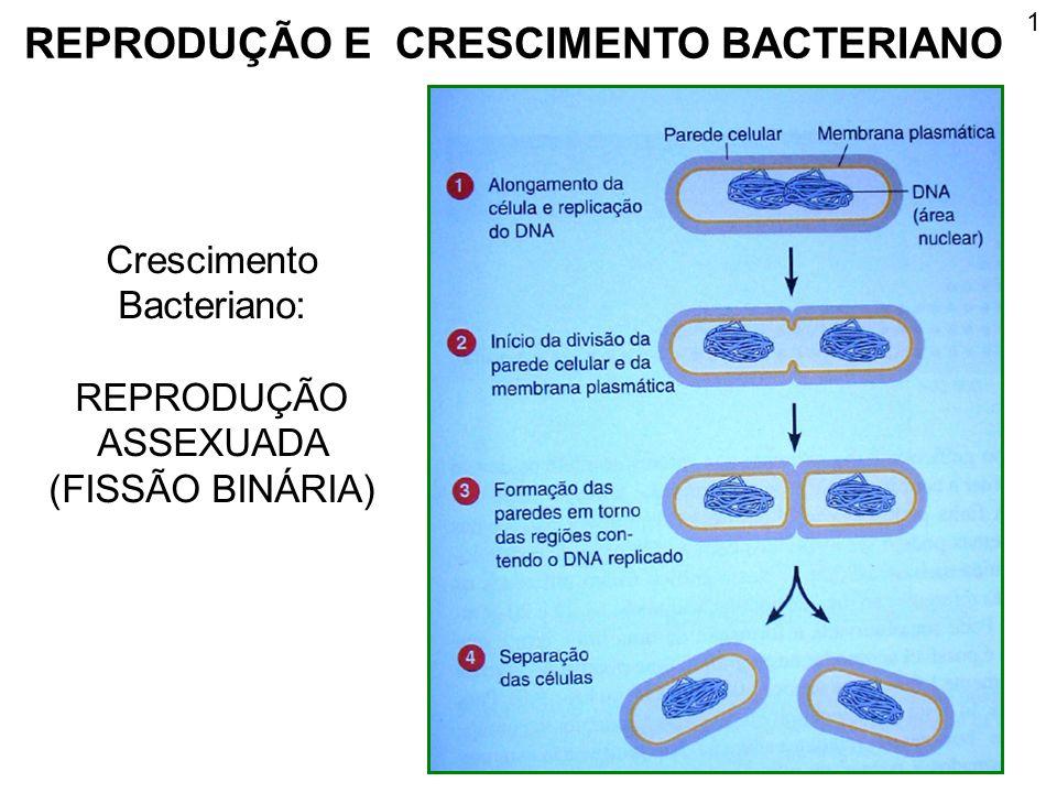 1 REPRODUÇÃO E CRESCIMENTO BACTERIANO Crescimento Bacteriano: REPRODUÇÃO ASSEXUADA (FISSÃO BINÁRIA)