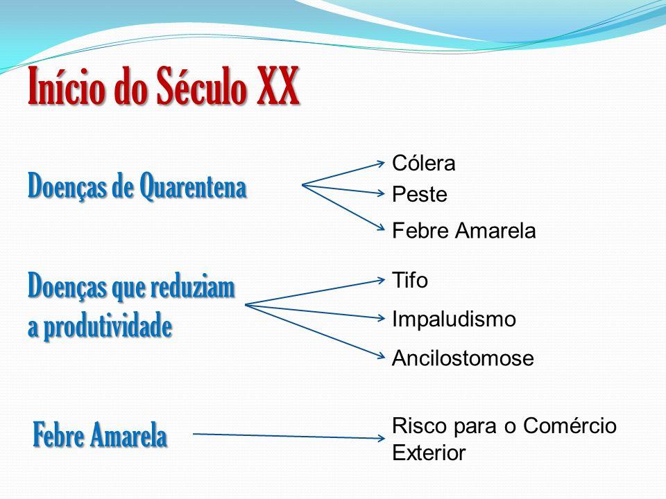 Início do Século XX Doenças de Quarentena Doenças que reduziam a produtividade Febre Amarela Cólera Peste Febre Amarela Tifo Impaludismo Ancilostomose