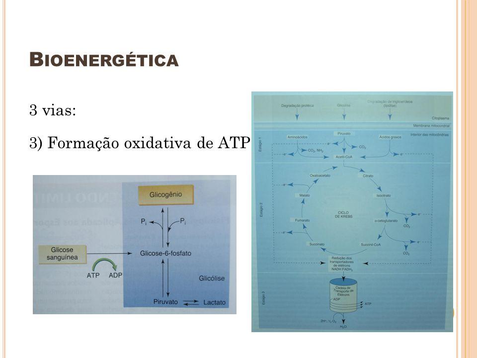 B IOENERGÉTICA 3 vias: 3) Formação oxidativa de ATP