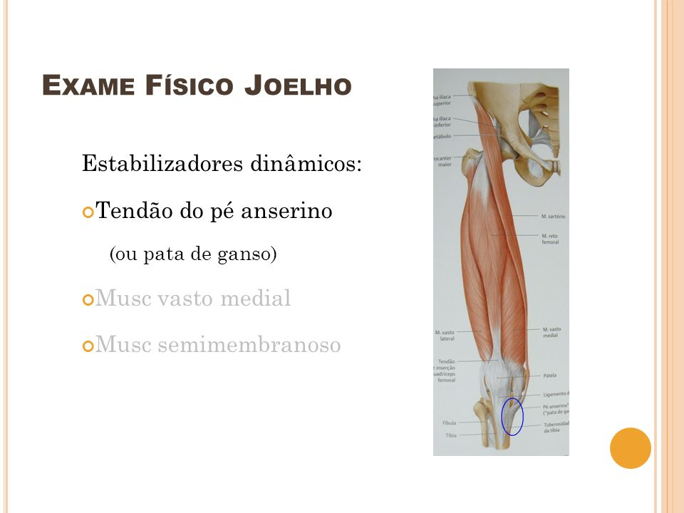 E XAME F ÍSICO J OELHO Estabilizadores dinâmicos: Tendão do pé anserino (ou pata de ganso) Musc vasto medial Musc semimembranoso