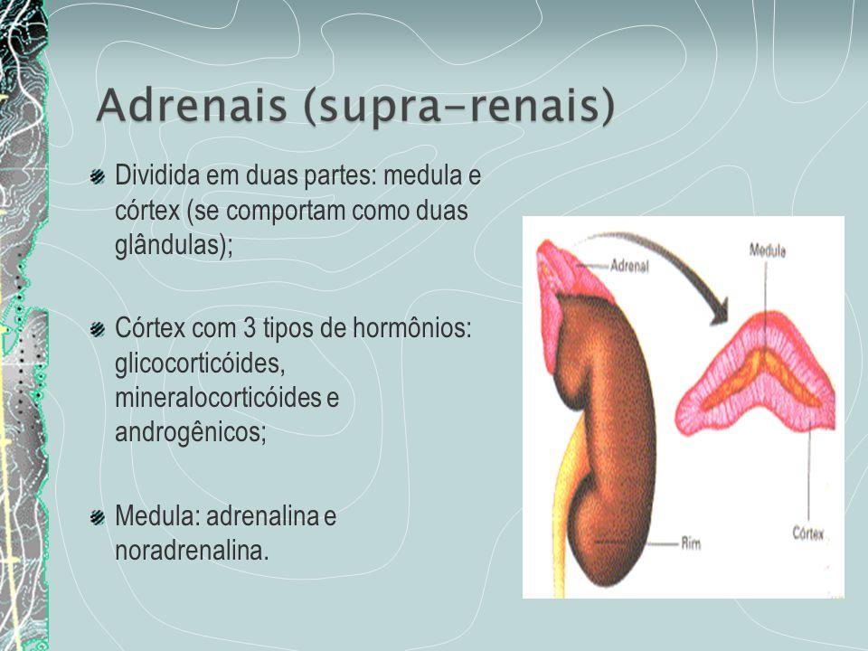 Dividida em duas partes: medula e córtex (se comportam como duas glândulas); Córtex com 3 tipos de hormônios: glicocorticóides, mineralocorticóides e