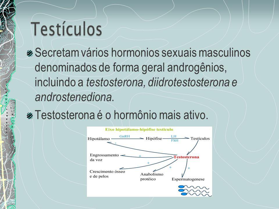 Secretam vários hormonios sexuais masculinos denominados de forma geral androgênios, incluindo a testosterona, diidrotestosterona e androstenediona. T