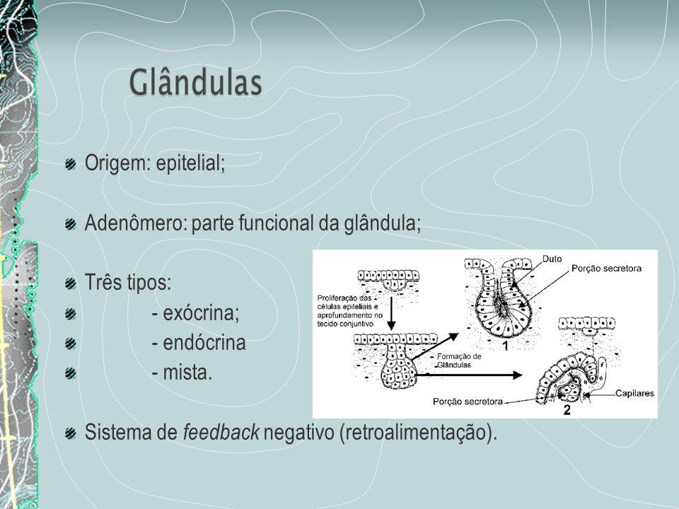 Origem: epitelial; Adenômero: parte funcional da glândula; Três tipos: - exócrina; - endócrina - mista. Sistema de feedback negativo (retroalimentação