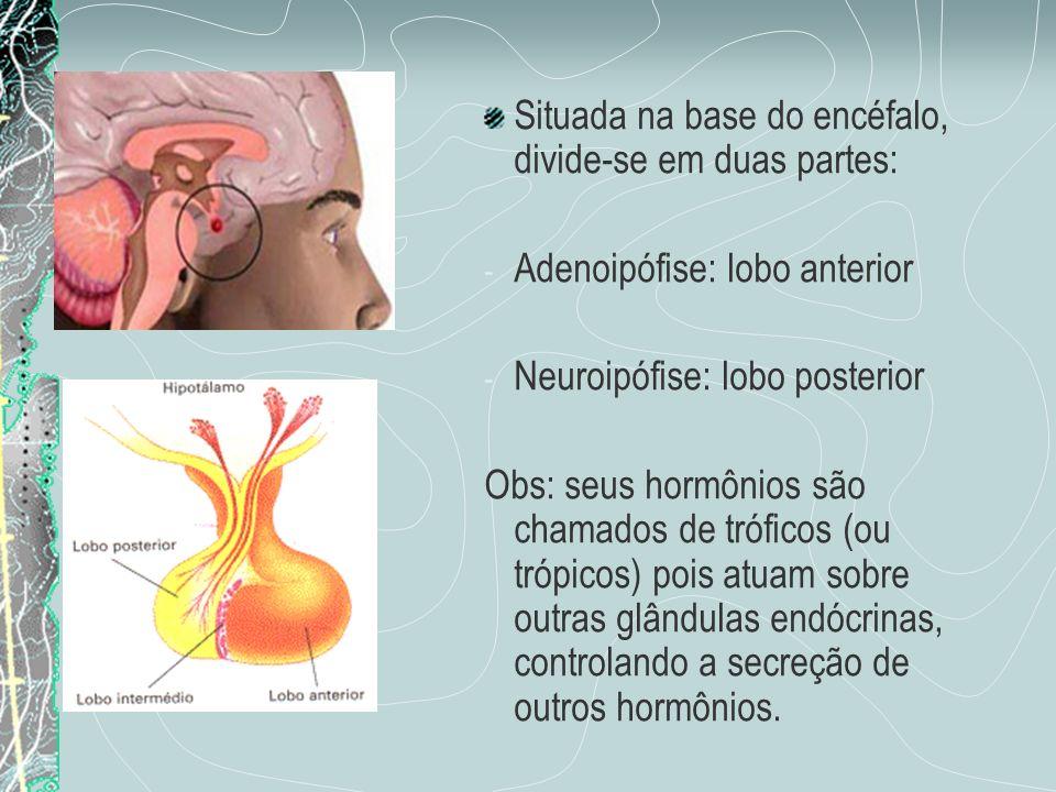 Situada na base do encéfalo, divide-se em duas partes: - Adenoipófise: lobo anterior - Neuroipófise: lobo posterior Obs: seus hormônios são chamados d