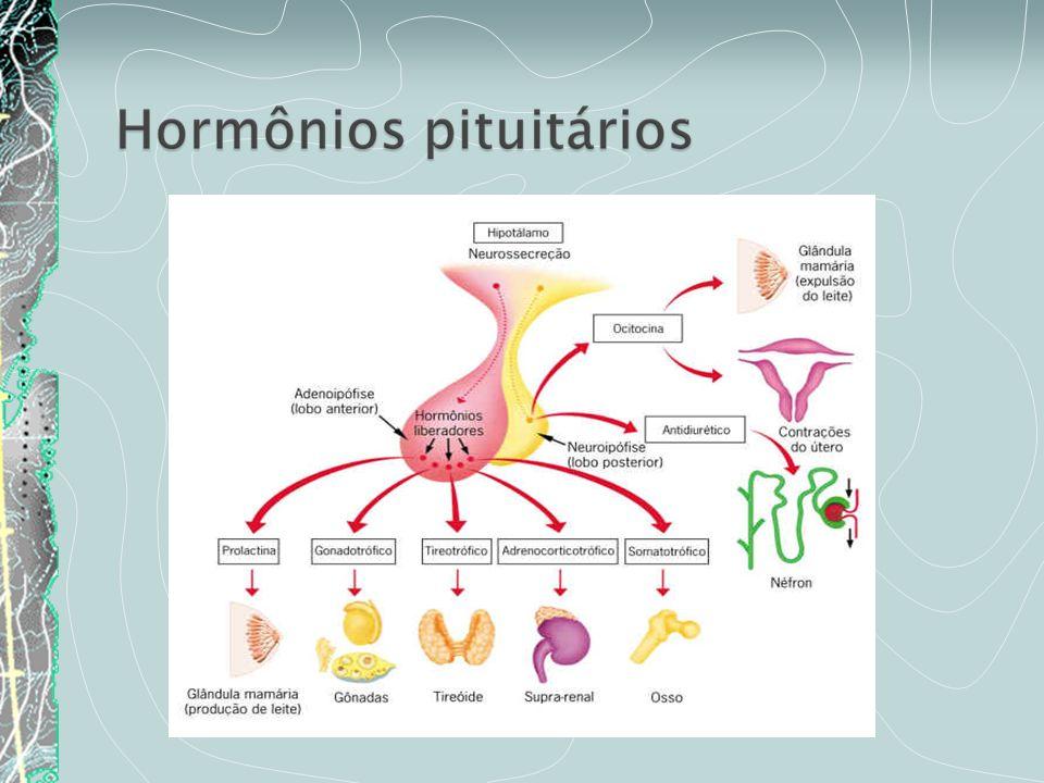 Gigantismo/ Acromegalia Nanismo Hormônio do crescimento, ou GH, somatotropina