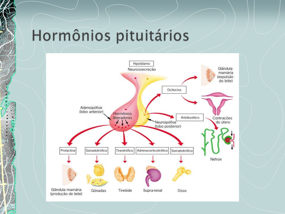 Hormônios sexuais femininos: estrogênio e progesterona.