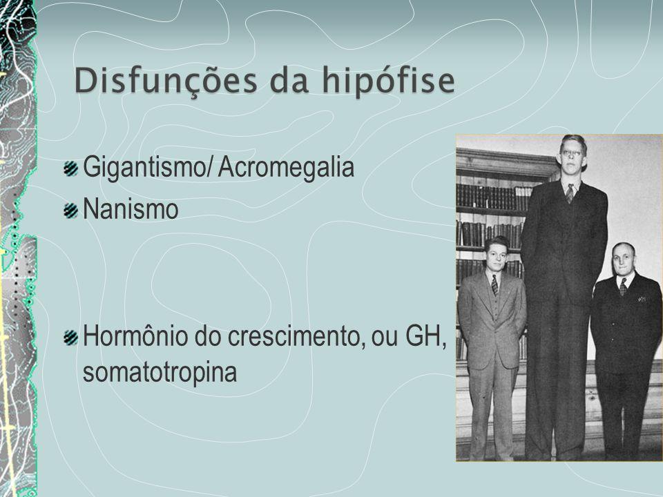 Hipotálamo (adeno-hipófise) Prolactina – estimula o desenvolvimento das mamas e produção de leite após o parto