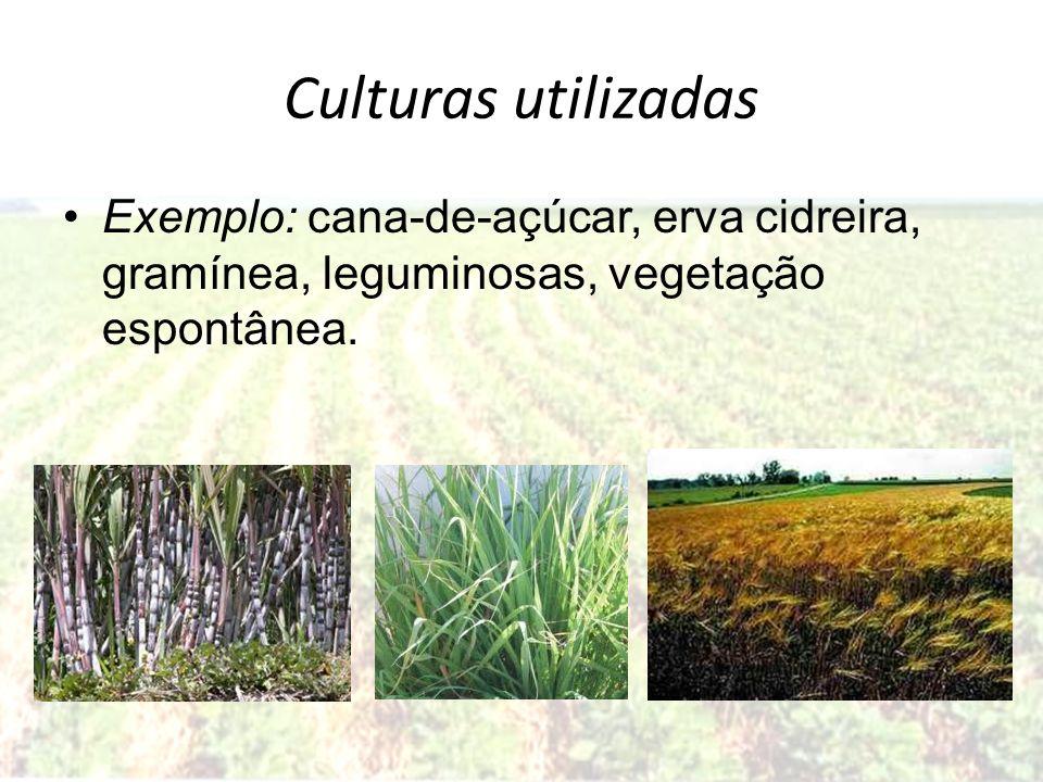 Culturas utilizadas Exemplo: cana-de-açúcar, erva cidreira, gramínea, leguminosas, vegetação espontânea.