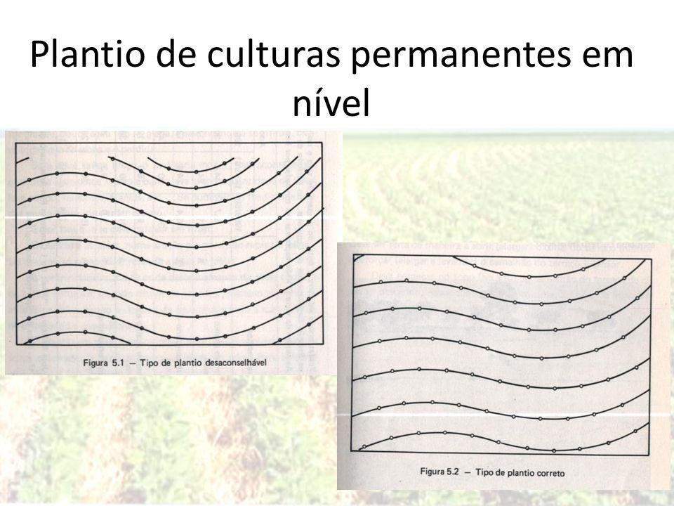 95 Plantio de culturas permanentes em nível