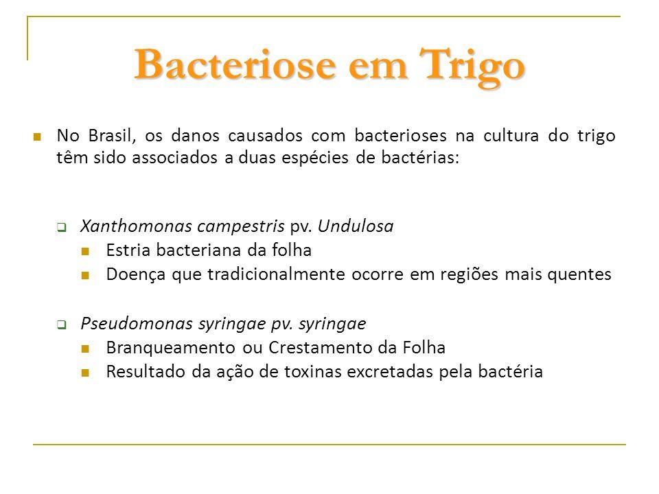 Estria Bacteriana Doença dos cerais de inverno A Estria bacteriana do trigo é considerada uma doença importante na região do norte do Paraná, sul de São Paulo e Mato Grosso do Sul Danos de até 40% da produção têm sido registrados sob condições favoráveis à doença É uma doença de difícil controle