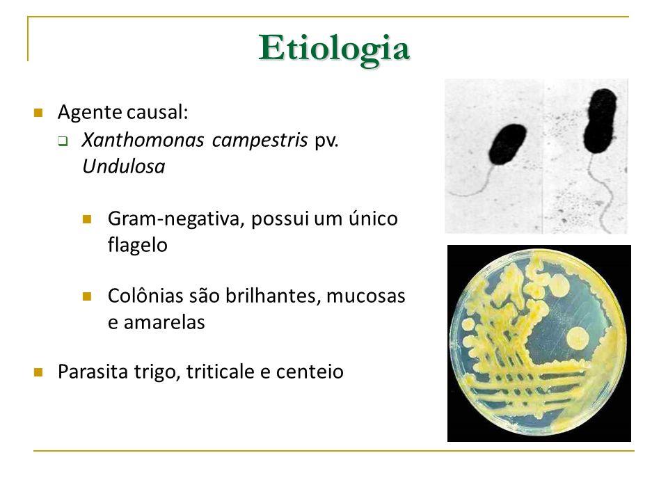 Ciclo da doença e epidemiologia Sobrevivência Sobrevivência Sementes bactéria sobrevive nas sementes por até 63 meses Restos culturais Trigo e cevada Permanece por períodos de até 8 meses