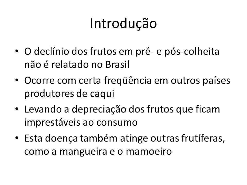 Introdução O declínio dos frutos em pré- e pós-colheita não é relatado no Brasil Ocorre com certa freqüência em outros países produtores de caqui Leva