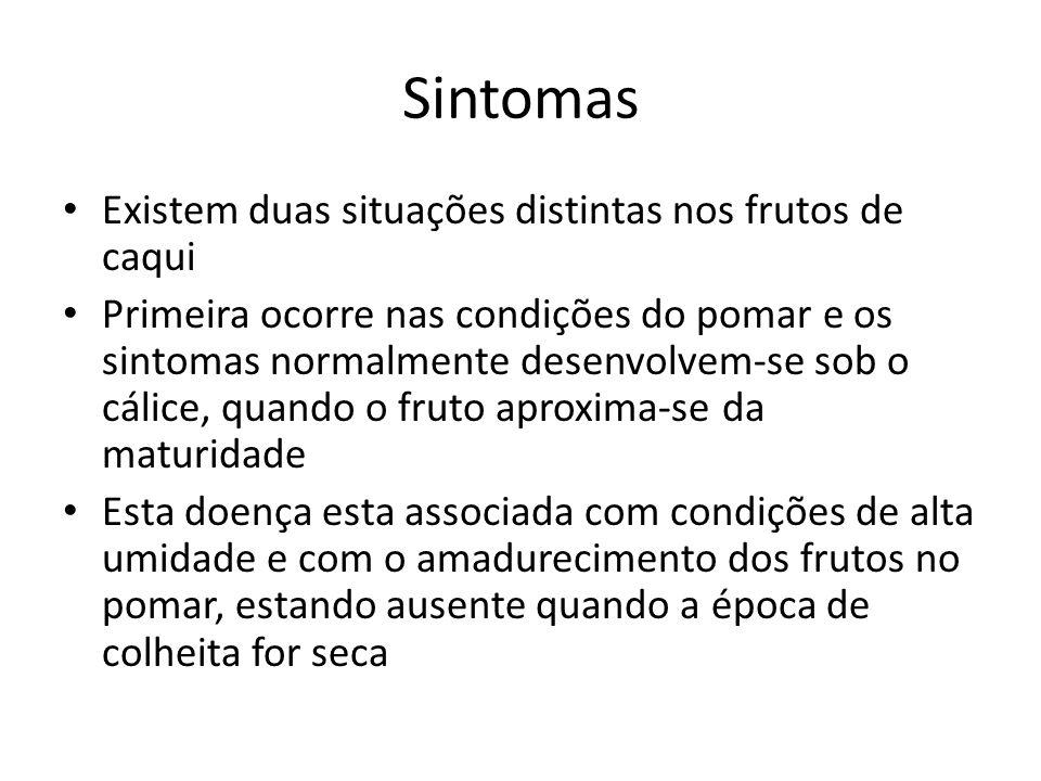 Sintomas Existem duas situações distintas nos frutos de caqui Primeira ocorre nas condições do pomar e os sintomas normalmente desenvolvem-se sob o cá