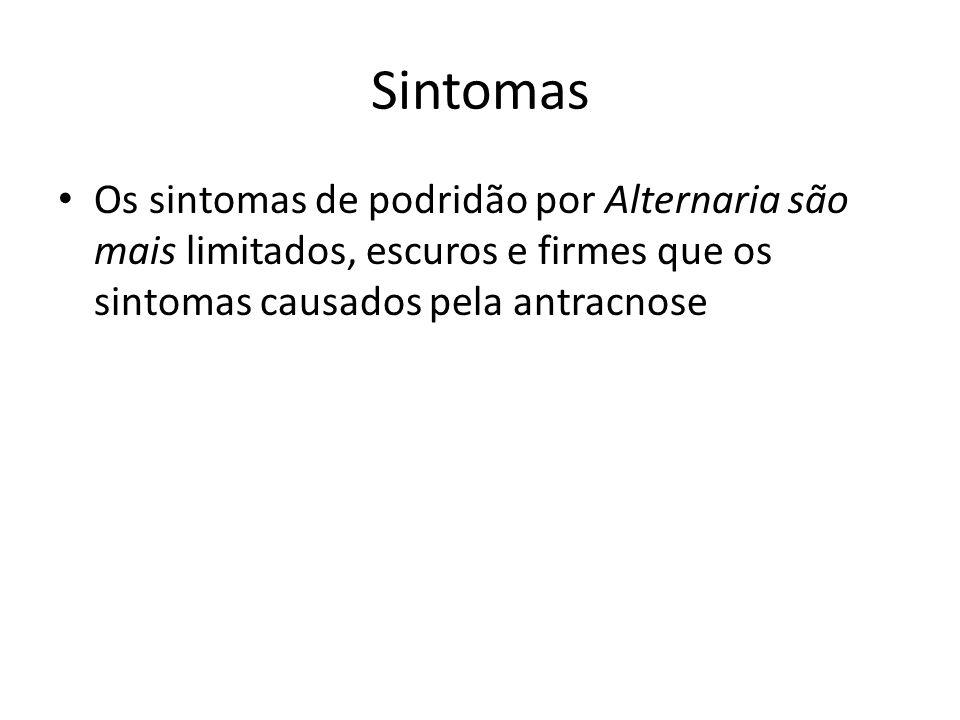 Sintomas Os sintomas de podridão por Alternaria são mais limitados, escuros e firmes que os sintomas causados pela antracnose