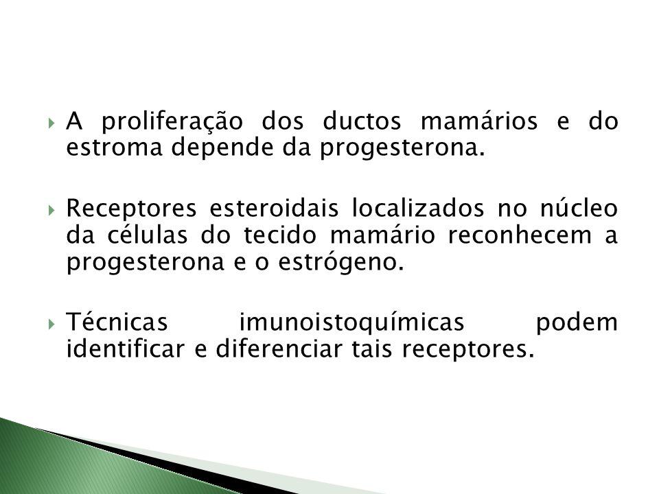 A proliferação dos ductos mamários e do estroma depende da progesterona. Receptores esteroidais localizados no núcleo da células do tecido mamário rec