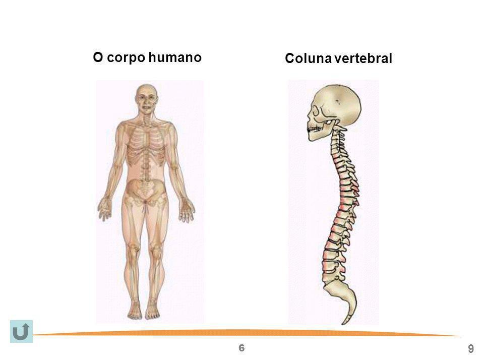 6 9 O corpo humano Coluna vertebral