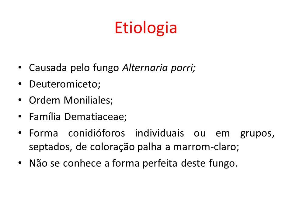 Etiologia Causada pelo fungo Alternaria porri; Deuteromiceto; Ordem Moniliales; Família Dematiaceae; Forma conidióforos individuais ou em grupos, sept