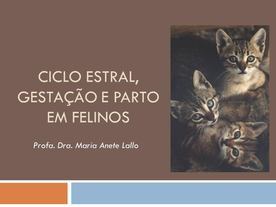CICLO ESTRAL, GESTAÇÃO E PARTO EM FELINOS Profa. Dra. Maria Anete Lallo