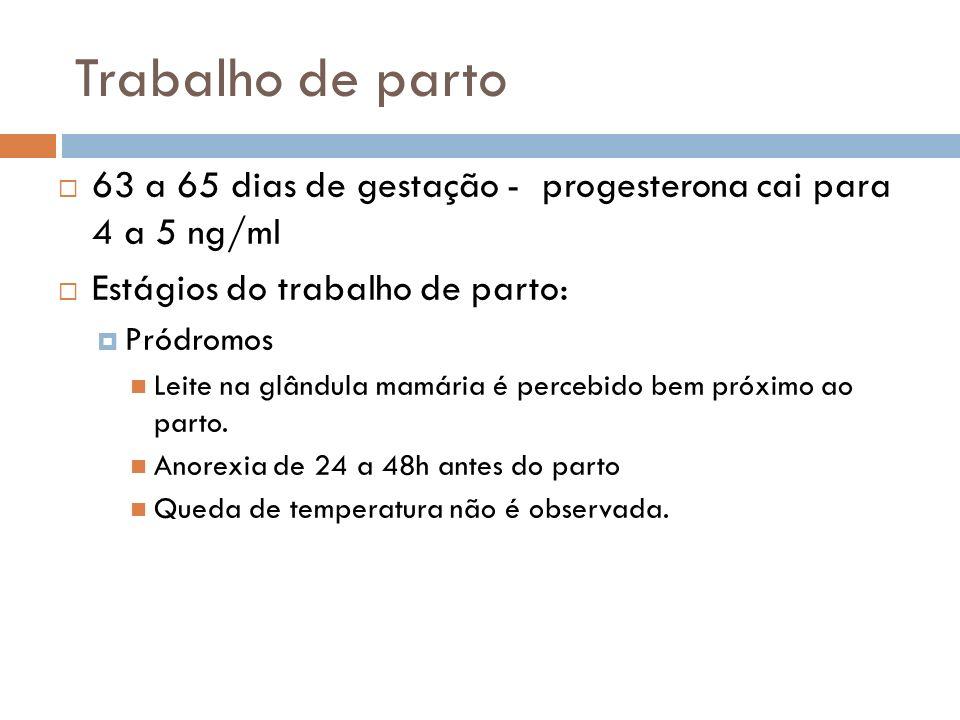 Trabalho de parto 63 a 65 dias de gestação - progesterona cai para 4 a 5 ng/ml Estágios do trabalho de parto: Pródromos Leite na glândula mamária é pe