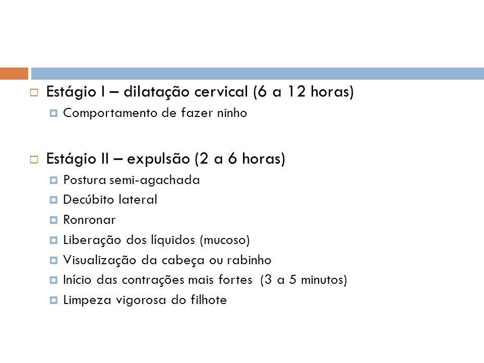 Estágio I – dilatação cervical (6 a 12 horas) Comportamento de fazer ninho Estágio II – expulsão (2 a 6 horas) Postura semi-agachada Decúbito lateral