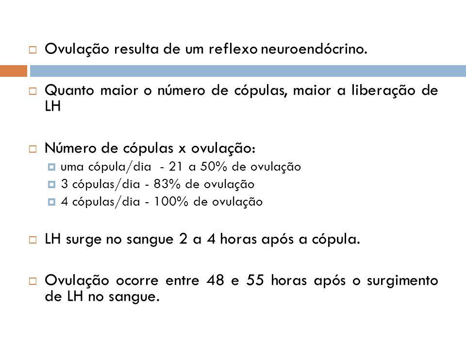 Ovulação resulta de um reflexo neuroendócrino. Quanto maior o número de cópulas, maior a liberação de LH Número de cópulas x ovulação: uma cópula/dia
