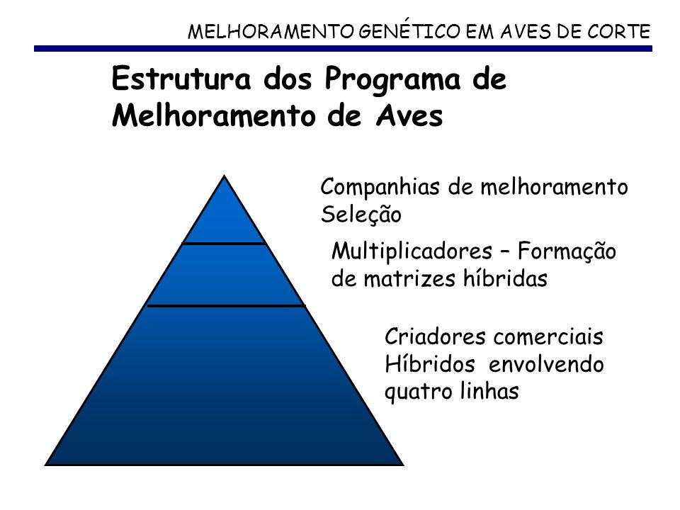 MELHORAMENTO GENÉTICO EM AVES DE CORTE Estrutura dos Programa de Melhoramento de Aves Companhias de melhoramento Seleção Multiplicadores – Formação de