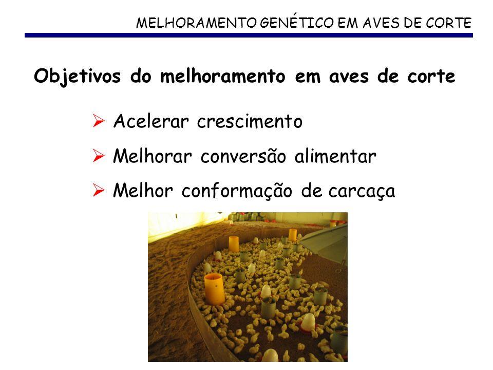MELHORAMENTO GENÉTICO EM AVES DE CORTE Acelerar crescimento Melhorar conversão alimentar Melhor conformação de carcaça Objetivos do melhoramento em av