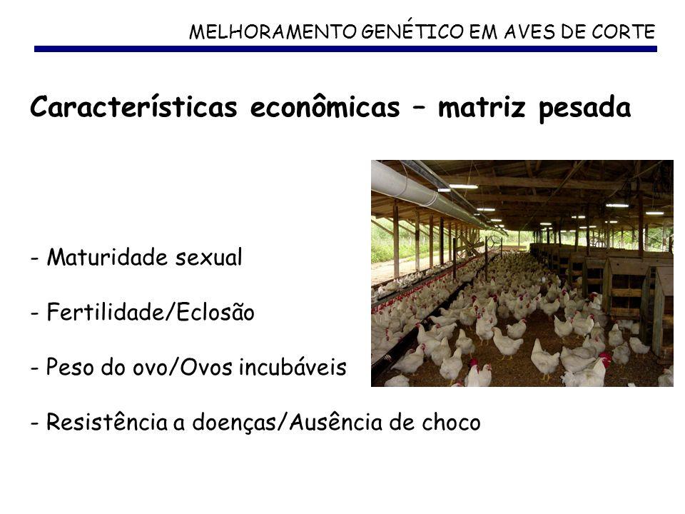 MELHORAMENTO GENÉTICO EM AVES DE CORTE Características econômicas – matriz pesada - Maturidade sexual - Fertilidade/Eclosão - Peso do ovo/Ovos incubáv